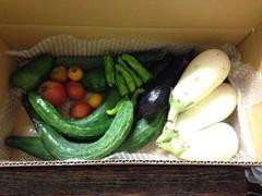 お試しセット(季節の単品野菜セット)