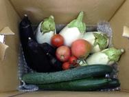 季節の単品野菜セット