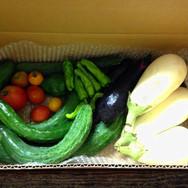 減農薬 野菜セット